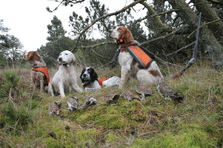 Sneppejagt over stående hund