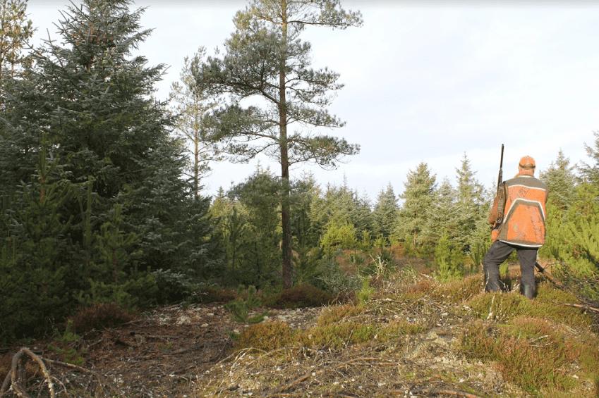 Skovsnepper