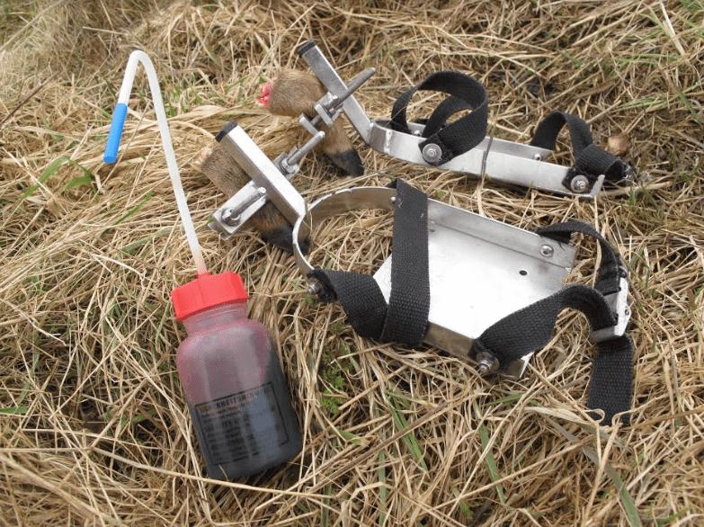 færtsko og flaske blod til schweisstræning
